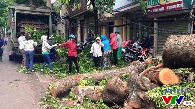 Không chỉ ở đường Trần Xuân Soạn, trên phố Ngô Thì Nhậm cũng có hàng loạt cây to bật gốc, đổ chắn ngang đường.