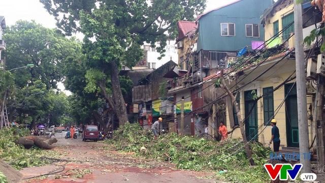Theo thống kê, có 667 cây xanh bị gãy đổ tại Thủ đô Hà Nội sau cơn bão số 1.