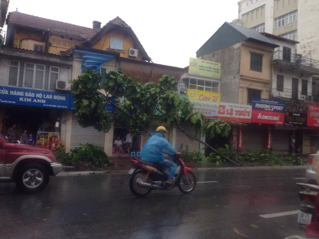 Gió thổi ngược khiến cây đổ rạp, người đi đường khó khăn trong việc di chuyển