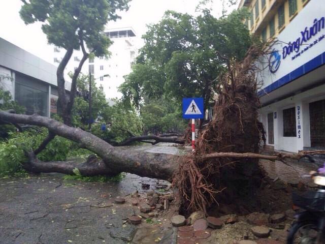 Loạt cây to đổ ngang đường khiến tuyến đường bị tắc hoàn toàn