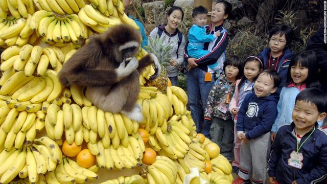 Everland nằm trong top 10 công viên giải trí thu hút nhất thế giới và là công viên giải trí hiện đại và lớn nhất Hàn Quốc.