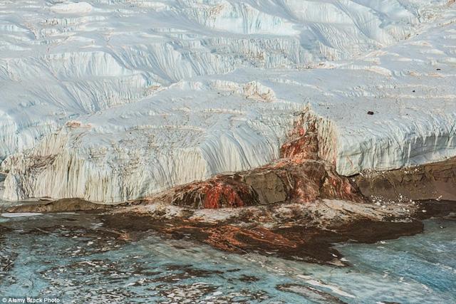 Hiện tượng thác máu ở hồ băng Taylor Glacier trông giống như khung cảnh đáng sợ khi một cuộc chiến đi qua. Sở dĩ dòng nước trên hồ Taylor Glacier có màu đỏ như máu là do dòng nước giàu muối chứa nhiều sắt.