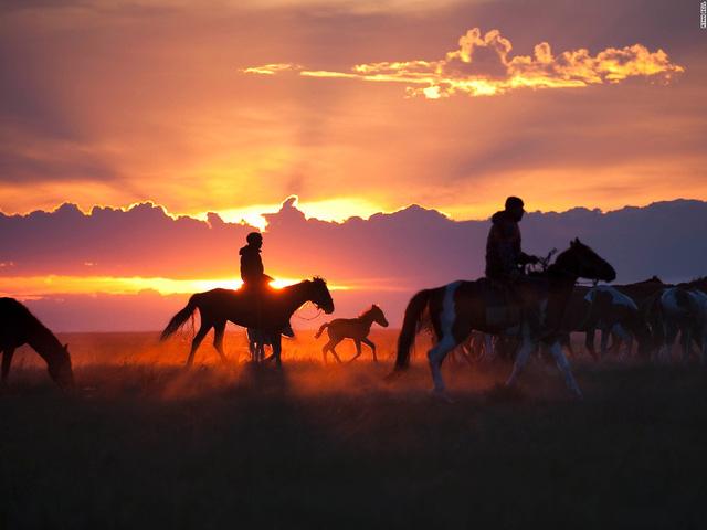 Vùng Pavlodar, Đông Bắc Kazakhstan, những người chăn ngựa đang đưa đàn ngựa của họ tớ một bãi quây để nghỉ tối.