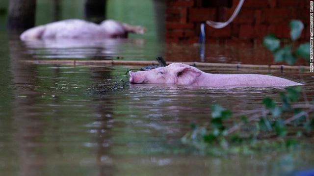 Nhiều người đã phải tìm cách di dời khỏi khu vực bị ngập lụt, thậm chí phải bỏ lại gia súc.