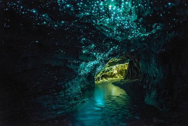 Hang động đom đóm Waitomo (New Zealand) khiến du khách ngỡ như lạc vào xứ thần tiên với thứ ánh sáng xanh kỳ ảo phát ra từ hàng nghìn con đom đóm bên trong động.