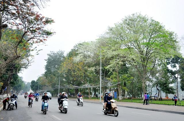 Hoa sưa mọc rải rác ở Hà Nội nhưng đẹp nhất vẫn là ở đường Thanh niên, Hồ Tây, Hồ Giảng Võ và trên phố Đinh Tiên Hoàng... Những cành hoa sưa rủ trắng những con đường khiến cho Hà Nội bỗng trở nên đẹp lãng mạn hơn bao giờ hết.