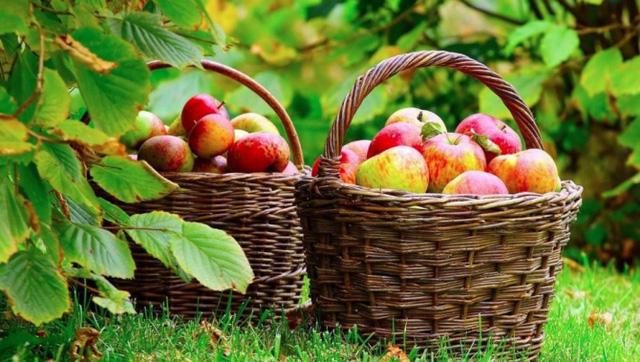 Ăn táo thường xuyên giúp bạn có sức khỏe tốt.