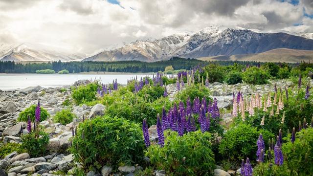 New Zealand là quốc gia có không khí trong lành, nơi có nhiều động vật hoang dã, khiến cho người dân ở đây cảm thấy như đang ở thiên đường.