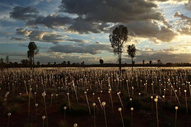 Sa mạc Uluru rộng lớn có diện tích tương đương với 4 sân bóng đá được chiếu sáng bởi 50.000 bóng đèn lung linh tạo nên một khung cảnh huyền ảo.