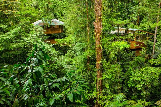 Erica và Matt đã mua 600 mẫu đất rừng. Họ bảo vệ khu rừng và giúp cho tất cả mọi người hiểu điều này. Họ không đốn hạ bất kì loài cây nào và những ngôi nhà cây được xây dựng mà không hề làm tổn hại đến thiên nhiên.
