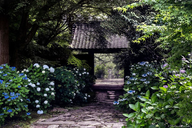 Những cơn mưa khiến cây cối như được gột sạch bụi bẩn, khoác lên mình tấm áo mới màu xanh biếc.