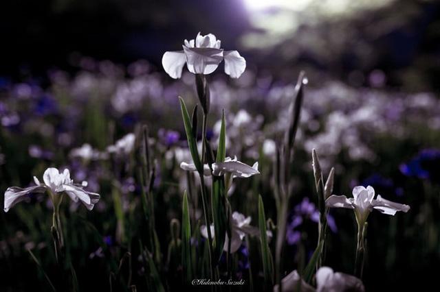 Những bông hoa vẫn còn vương vấn giọt nước mưa.
