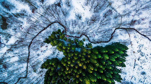 Giải Nhất chủ đề Thiên nhiên hoang dã: Rừng Kalbyris, Đan Mạch.