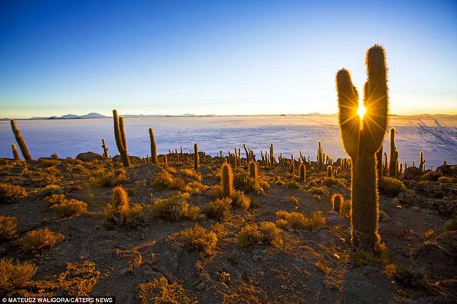 Nhiếp ảnh gia 29 tuổi chia sẻ: Nhắc đến sa mạc muối, nhiều người nghĩ nó thật buồn tẻ nhưng tôi không hề cảm thấy cảnh quan ở đây đơn điệu. Bình minh và hoàng hôn tạo ra một cảnh tượng kỳ diệu của các sắc thái màu sắc mà tôi có thể chiêm ngưỡng mãi mãi.