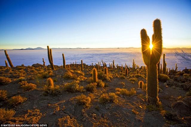 Nhiếp ảnh gia 29 tuổi chia sẻ: Nhắc đến sa mạc muối, nhiều người nghĩ nó thật buồn tẻ, nhưng tôi không hề cảm thấy cảnh quan ở đây đơn điệu. Bình minh và hoàng hôn tạo ra một cảnh tượng kỳ diệu của các sắc thái màu sắc mà tôi có thể chiêm ngưỡng mãi mãi.