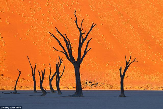 Những thân cây khô nổi bật trên nền cát vàng ở Dead Vlei - hay còn gọi là Nghĩa địa cây khô ở Namibia - trông giống như một bức tranh hơn là cảnh thực.