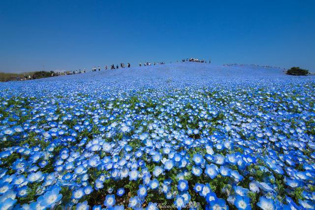Nhiếp ảnh gia Hidenobu Suzuki không quên ghi lại những khoảnh khắc đẹp đến ngỡ ngàng vào mùa xuân của đất nước mình.