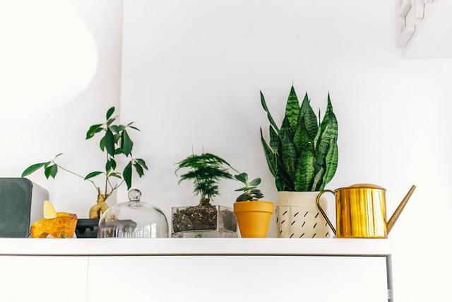 Chủ nhân cũng không quên tạo nên những mảng không gian xanh trong nhà bằng các chậu cây xinh xắn.