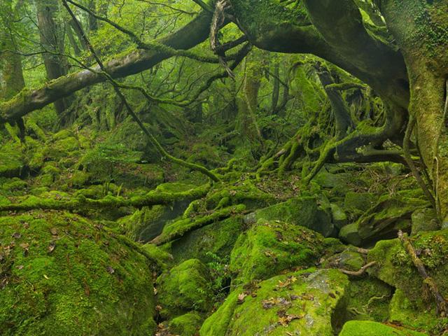 Dù được người Nhật ưa chuộng từ lâu nhưng hòn đảo cận nhiệt đới Yakushima chỉ mới bắt đầu thu hút sự chú ý của du khách. Nằm ngoài khơi bờ biển Kyushu, Nhật Bản, đảo Yakushima được vinh danh là Di sản thế giới của UNESCO. Nơi đây có những rừng cây phủ đầy rêu và những ngọn núi cao vút đang chờ được khám phá.