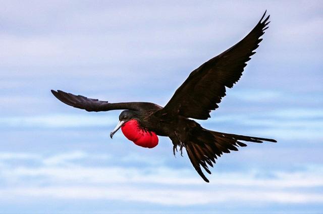 Đảo Galápagos của Ecuador nổi tiếng bởi số lượng lớn những chủng sinh học đặc hữu tại vùng này, bao gồm loài rùa khổng lồ, loài cự đà biển, loài chim cốc, chim cánh cụt bé hay những chú chim chiến chân xanh vụng về.