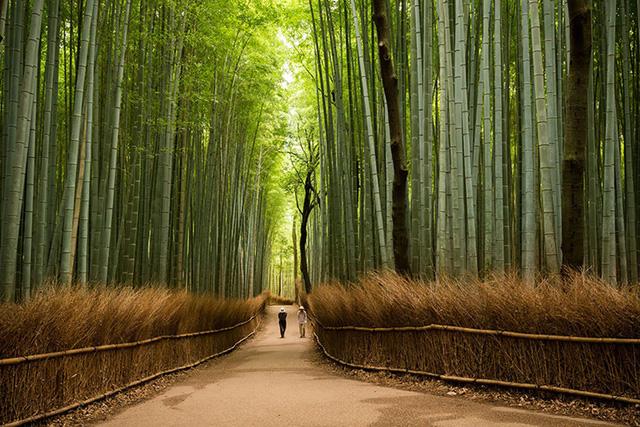 Cánh rừng tre Sagano nằm ở Arashiyama là điểm đến nổi tiếng thứ hai thu hút du khách ở Kyoto. Đi bộ trong cánh rừng tre này khiến bạn có cảm giác như lạc vào một thế giới khác vậy. Dù khá đông vào mùa du lịch cao điểm nhưng không thể phủ nhận rằng rừng tre Sagano là một nơi nên ghé thăm khi đến nơi này.