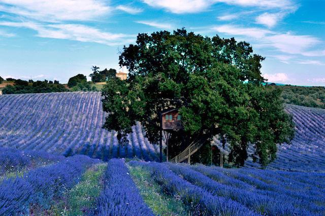 Nằm trên cánh đồng hoa oải hương tuyệt đẹp ở Arlena di Castro, Italy là Suite Bleue - ngôi nhà cây thần tiên như trong thế giới cổ tích thời thơ ấu.