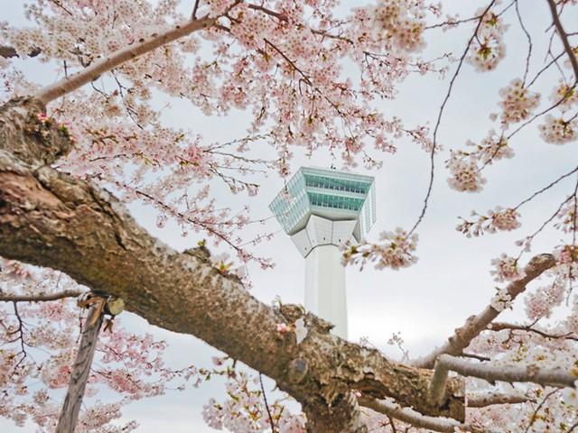 Tháp Goryokaku cũng là nơi tuyệt vời để ngắm cảnh Hakodate.