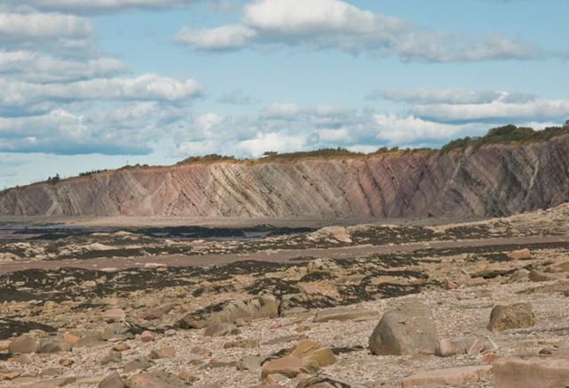 """Vách đá Joggins còn là nơi """"trưng bày"""" các mẫu hóa thạch hoàn chỉnh của 148 loài sinh vật cổ. Ảnh: routes."""