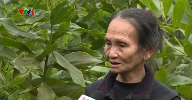 Bà Dương Thị Oanh ở xóm Tân Thành, xã Tân Lợi, Đồng Hỷ, Thái Nguyên.