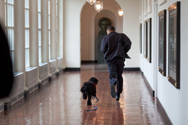 Tháng 3 năm 2008, Tổng thống Obama chạy với chú chó của gia đình.