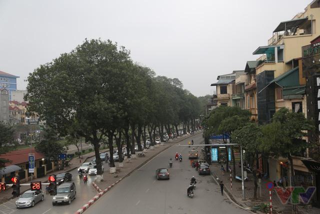 Tầm mắt được nâng cao ngang hàng cây xanh đều tăm tắp ở dải phân cách trên đường Láng khi lưu thông qua cầu vượt Trần Duy Hưng - Nguyễn Chí Thanh.