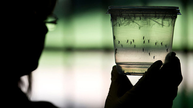 Cách phòng ngừa tốt nhất đối với virus Zika là ngăn chặn sự sinh sôi của muỗi