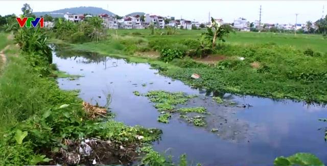 Nguồn nước tưới bị ô nhiễm nghiêm trọng.
