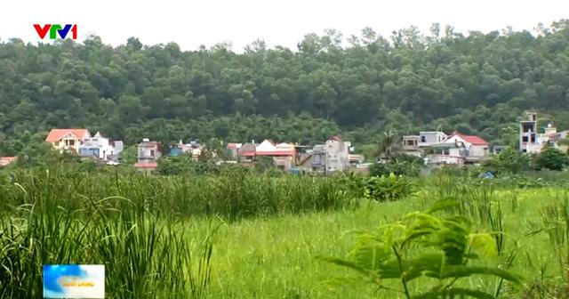 Đất lúa bị kẹt giữa đất đô thị, khu công nghiệp.