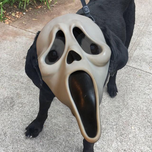 Hay là gương mặt Halloween này nhỉ?