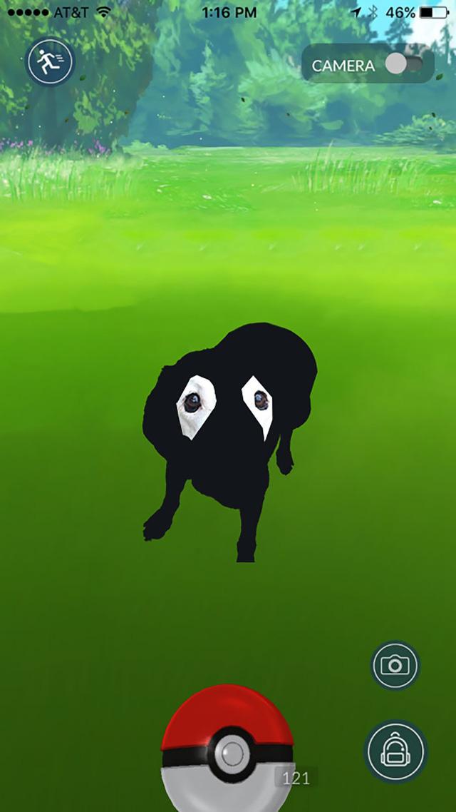 Labrador cũng trở thành một chú Pokémon độc nhất vô nhị.