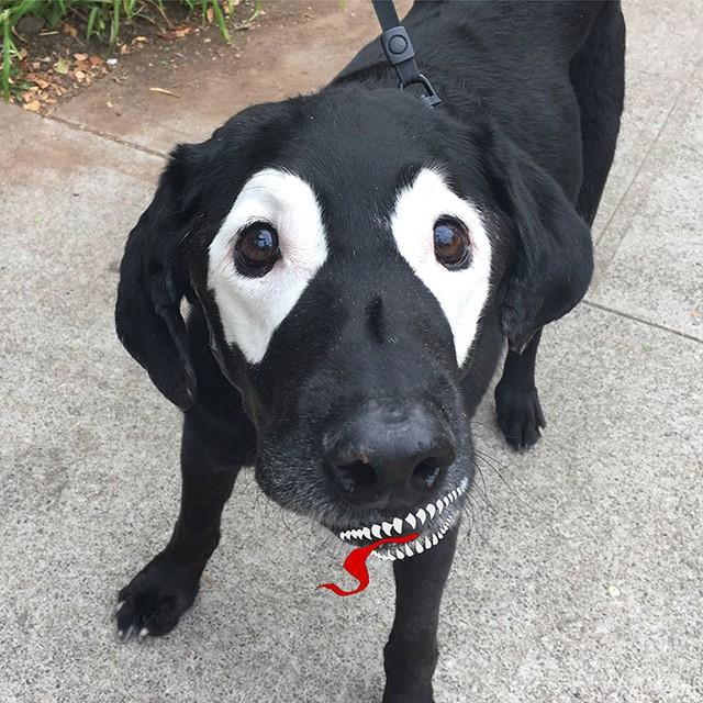Cái miệng chế này xem ra rất hợp với gương mặt chú chó.