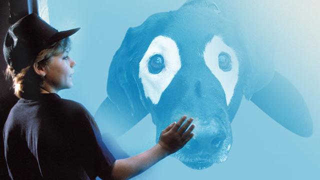 Labrador cũng được lột xác thành cá voi.