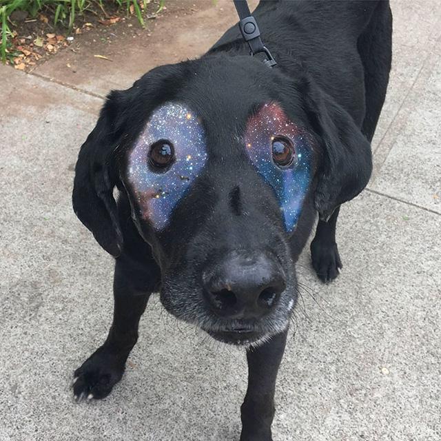Đôi mắt của Labrador trở thành... tâm điểm vũ trụ.