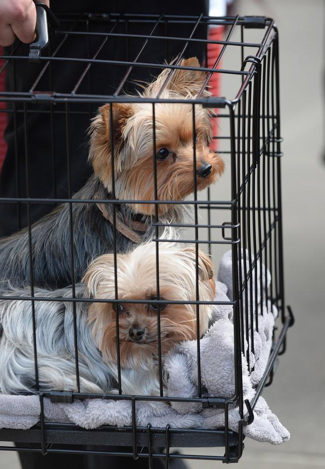 Hai chú thú cưng cũng được cho là mâu thuẫn giữa Johnny và Amber trong cuộc chiến ly hôn của họ.
