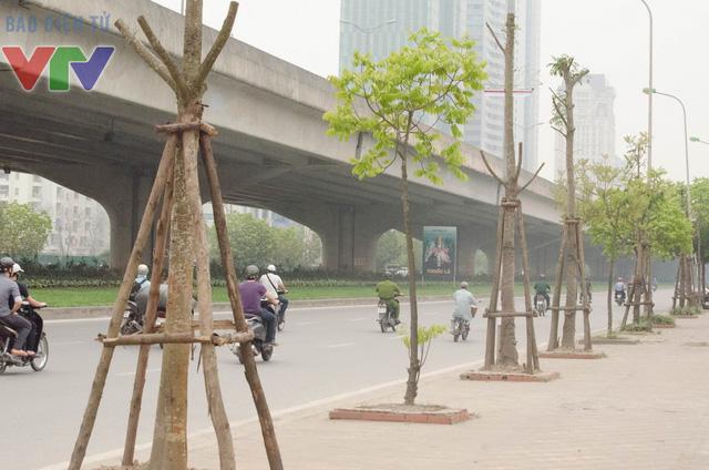 Hàng chục cây xanh trên tuyến đường Phạm Hùng, Khuất Duy Tiến (Hà Nội) đang bị chết khô, không có bóng mát.
