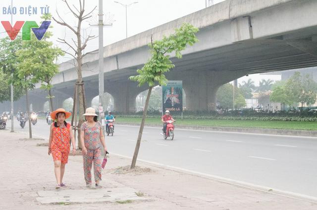 Người đi đường thiếu bóng mát của cây trong những ngày hè.