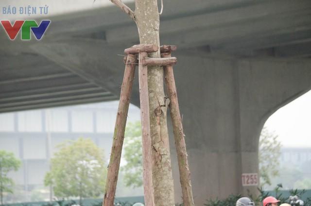 Một số cây chết khô và trụi lá, vỏ cây có giấu hiệu bong tróc.