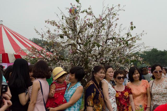 Rất đông người đến đây để ngắm hoa anh đào
