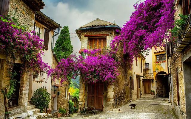 Ngôi làng nhỏ với những ngôi nhà tường gạch và hoa giấy đẹp mộng mơ tại Provence, Pháp.