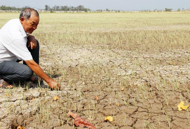 Một cánh đồng nứt toác đất mặt ruộng ở huyện Long Phú, Sóc Trăng (Ảnh: Zing.vn)