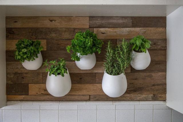 Những chậu cây treo hút mắt trên mảng tường gỗ tạo nên nét riêng cho căn bếp.