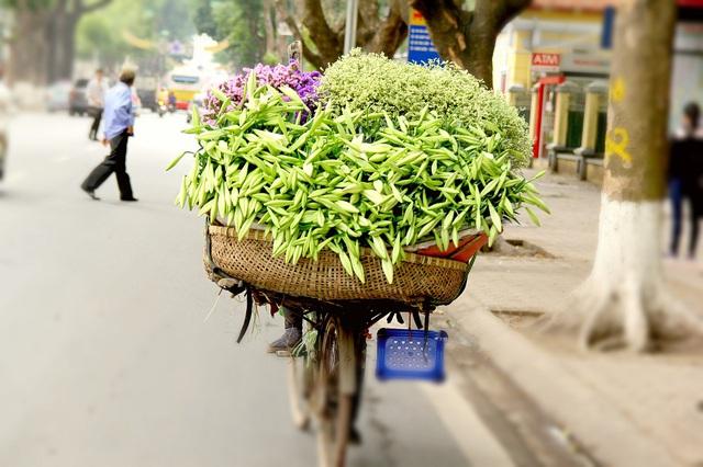 Hình ảnh những chiếc xe đạp cũ kĩ chở đầy hoa loa kèn xuôi ngược phố phường Hà Nội đã trở thành biểu tượng của tháng Tư