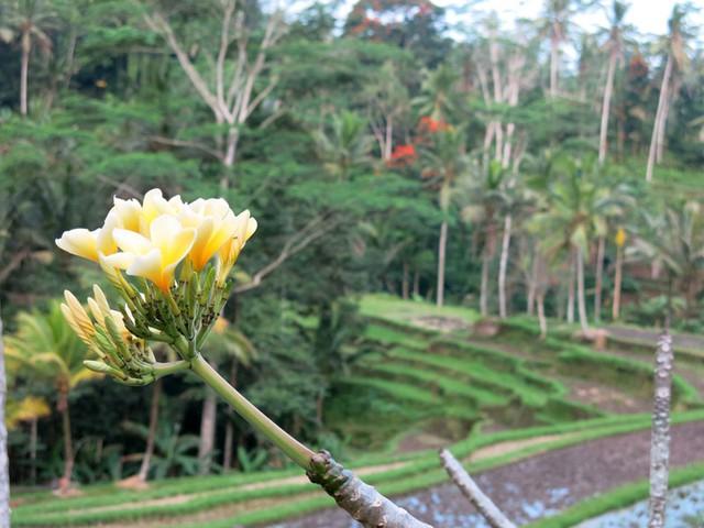 Ubud là điểm đến yêu thích tại hòn đảo du lịch nổi tiếng Bali, Indonesia (Ảnh: VTVNews)