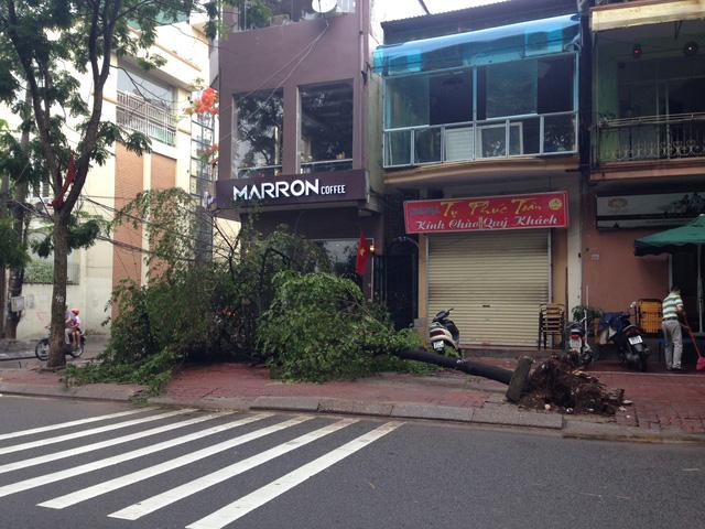 Nhiều cây cối bị đổ ngả nghiêng sau trận mưa xối xả